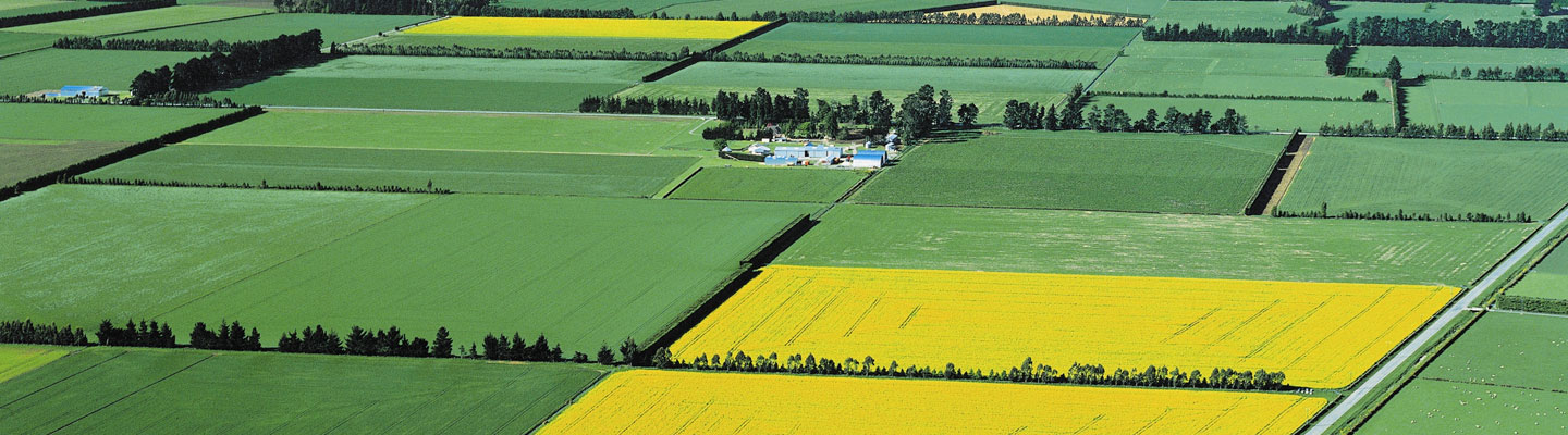 canterbury_plains