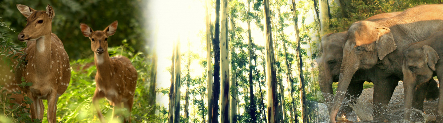 Forest Ooty